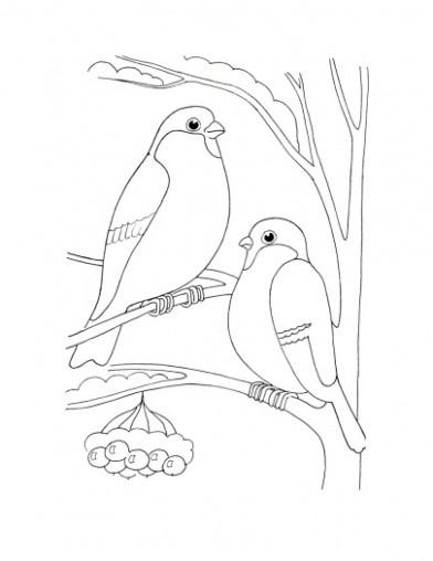 Зимующие птицы картинки раскраски